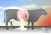 Cartoon: Crying over spilled MILK! (small) by Tonho tagged crying,milk,cow