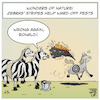 Cartoon: Bugs and Stripes (small) by Timo Essner tagged nature,biology,horses,zebras,stripes,insects,bugs,pests,ward,protection,mosquitoes,horsefly,horseflies,botfly,botflies,camouflage,cartoon,timo,essner