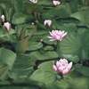 Cartoon: Seerosen (small) by alesza tagged seerosen seerose waterlilly flower blumen natur teich grün blüte painting