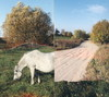 Cartoon: PUZZLE (small) by Kestutis tagged nature,way,horse,kestutis,lithuania,summer