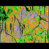 Cartoon: MH - The Colorful Jungle (small) by MoArt Rotterdam tagged rotterdam,oerwoud,jungle,colorful,kleurrijk