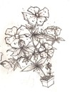 Cartoon: Flower sketch (small) by Playa from the Hymalaya tagged flower,blume
