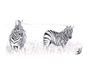 Cartoon: Equus quagga (small) by swenson tagged steppenzebra,zebra,afrika