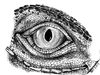 Cartoon: Eye of Iguana (small) by swenson tagged eye,animal,animals,tier,dragon,echse,leguan,iguana,reptil