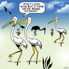 Cartoon: Storked (small) by toons tagged stalking,followed,storks,birds,romance