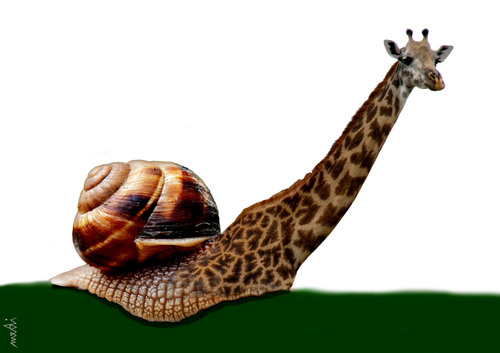 Cartoon: snailraffe (medium) by Medi Belortaja tagged giraffe,snail,animals,manipulation,genetic,genetical,dna