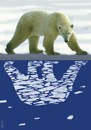 Cartoon: reflection in polar waters (small) by Medi Belortaja tagged reflection,in,polar,waters,bear