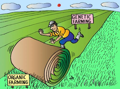 Cartoon: Genetic Farming (medium) by Alexei Talimonov tagged genetics,genetic,farming,organic